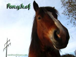 ponyhof_klein