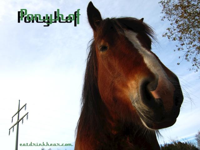 <!--:de-->Ponyhof – Chefkoch<!--:--><!--:en-->Ponyhof – Chefkoch<!--:-->